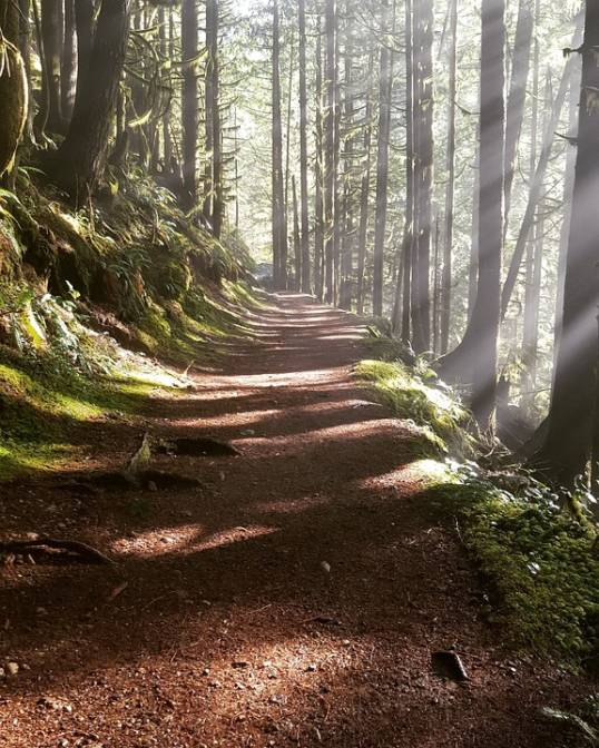 Walking Through The Woods:  Supporting a Grieving Person